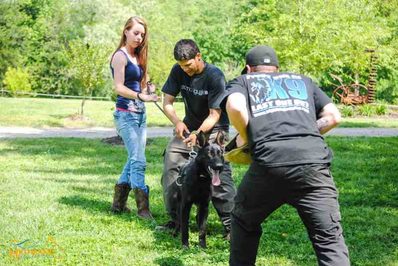 Large Of Dog Trainer Salary