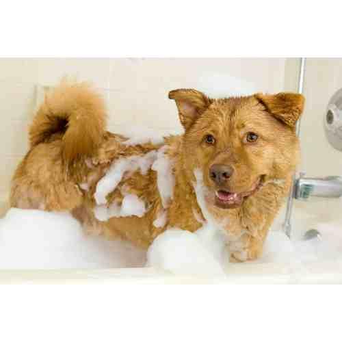 Medium Crop Of How Often Should You Bathe A Dog