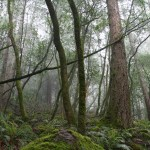 Fog hangs in the forest