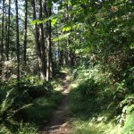 Douglas fir and bishop pine trees line the Mount Wittenberg Trail