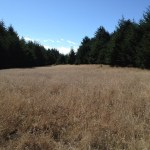 Meadow near the junction with Mt. Wittenberg summit trail