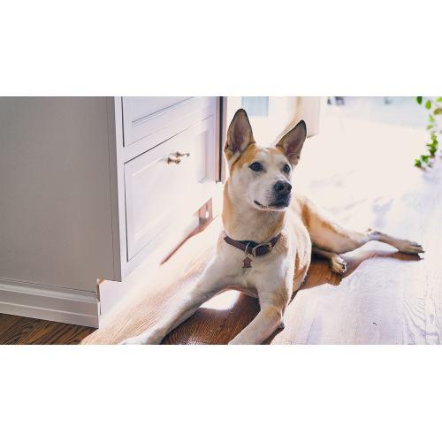 Medium Crop Of Dog Iq Test