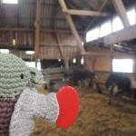 Yoda mit den Straussen