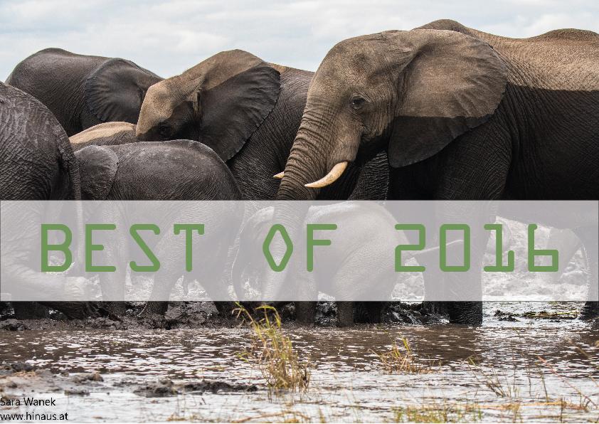 Elefanten Botswana