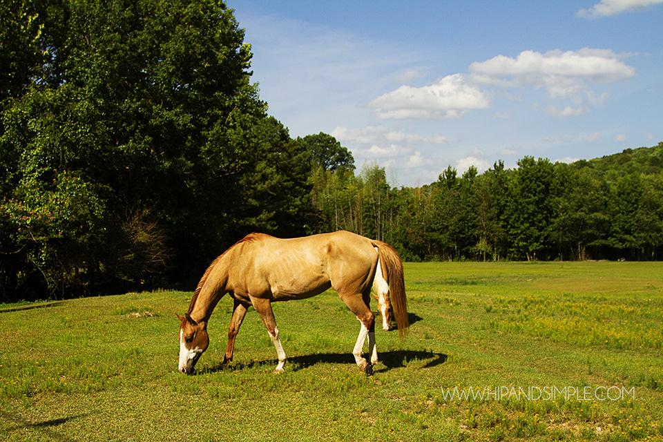 Farm Horse Pictures - Trussville, AL - 04