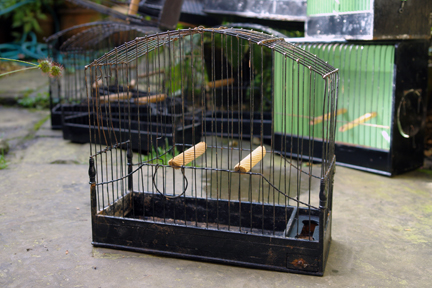 black painted vintage canary cage