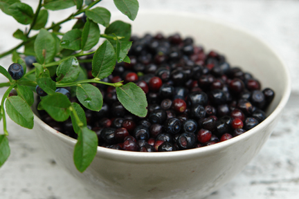 bowl of freshly picked bilberries