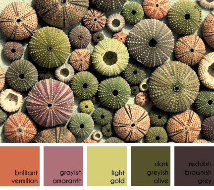collection of different coloured sea urchin shells