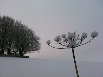 snow covered seed head and trees in the background