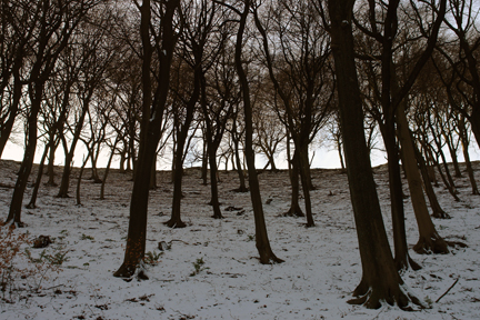 snow-covered trees in Centre Vale Park, Todmorden