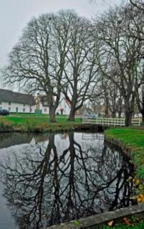 Histon Green tree reflection