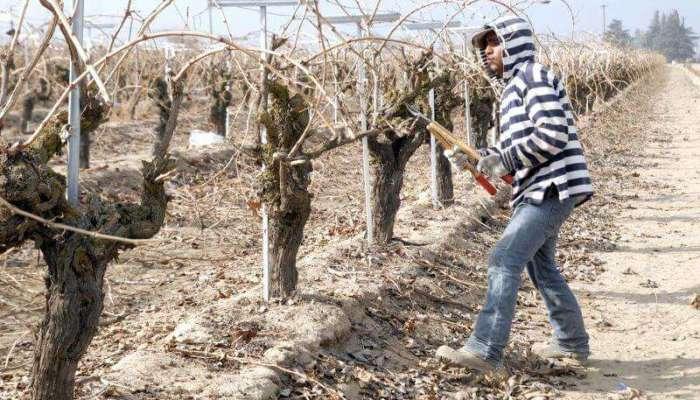 California: los campesinos podrán cobrar tiempo extra