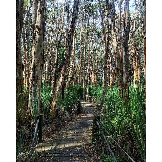 Lachlan Swamp Centennial Park