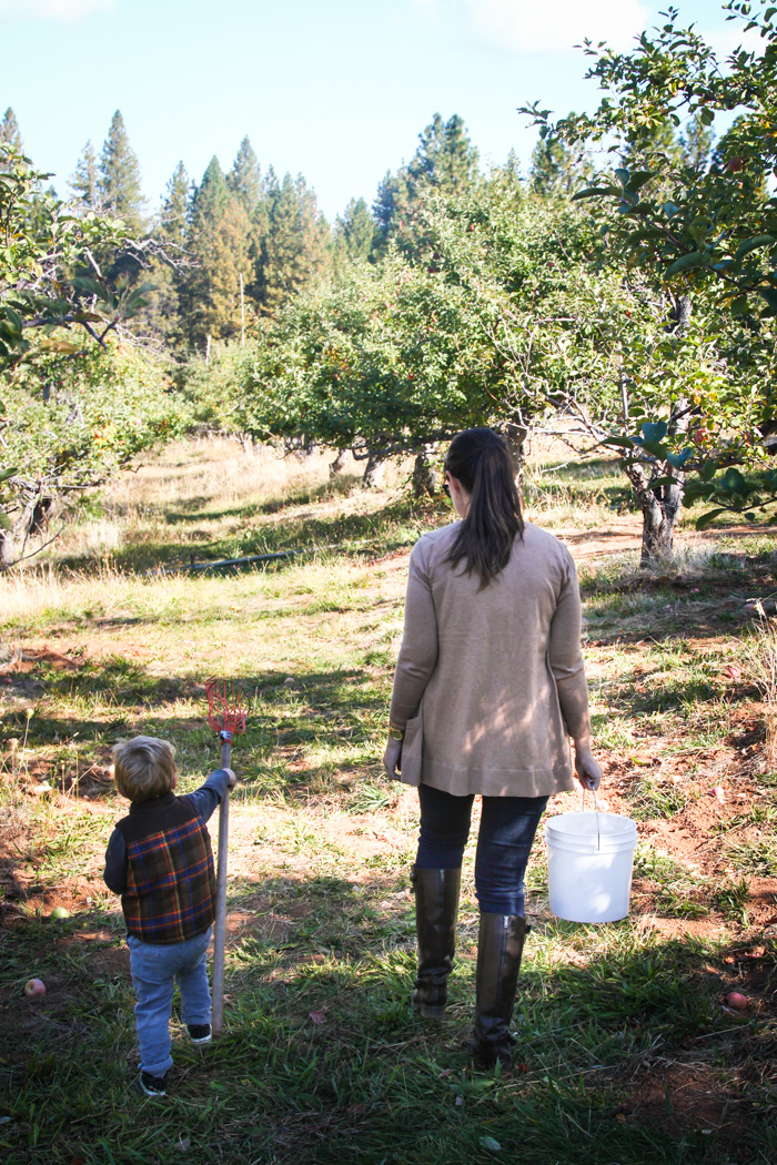 california  Apple picking in Apple Hill