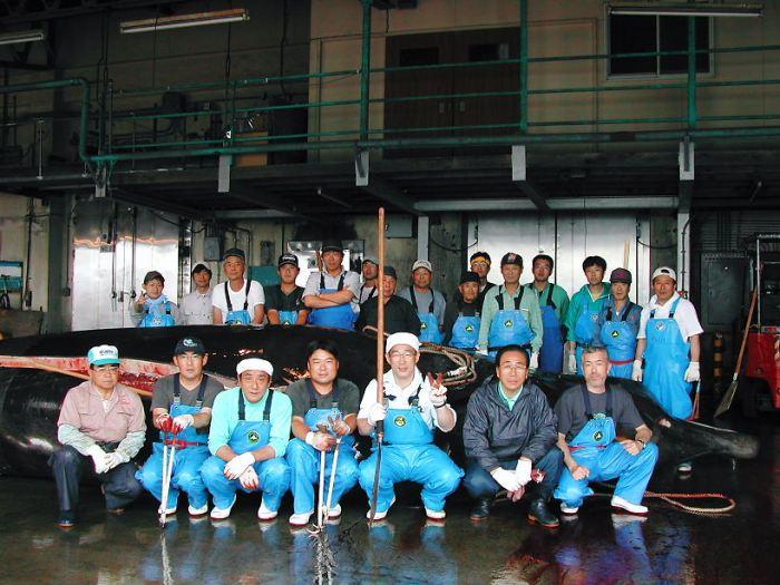 日本自稱殺海豚、鯨魚是傳統活動,實際卻是為了將牠們賣給水族館圖利。