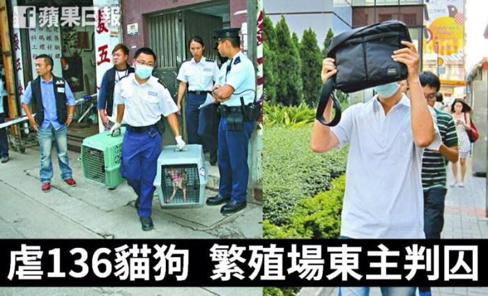 該繁殖場被警方去年揭破,當時136隻貓狗情況極差,慘不忍睹。圖片取自蘋果日報網站