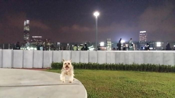 這真是歡迎狗狗的寵物公園嗎?