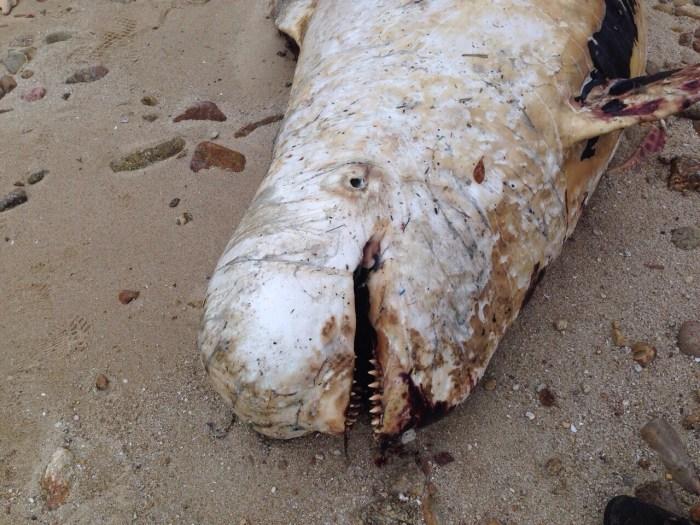 香港海洋公園保育基金「鯨豚擱淺行動組」提供圖片
