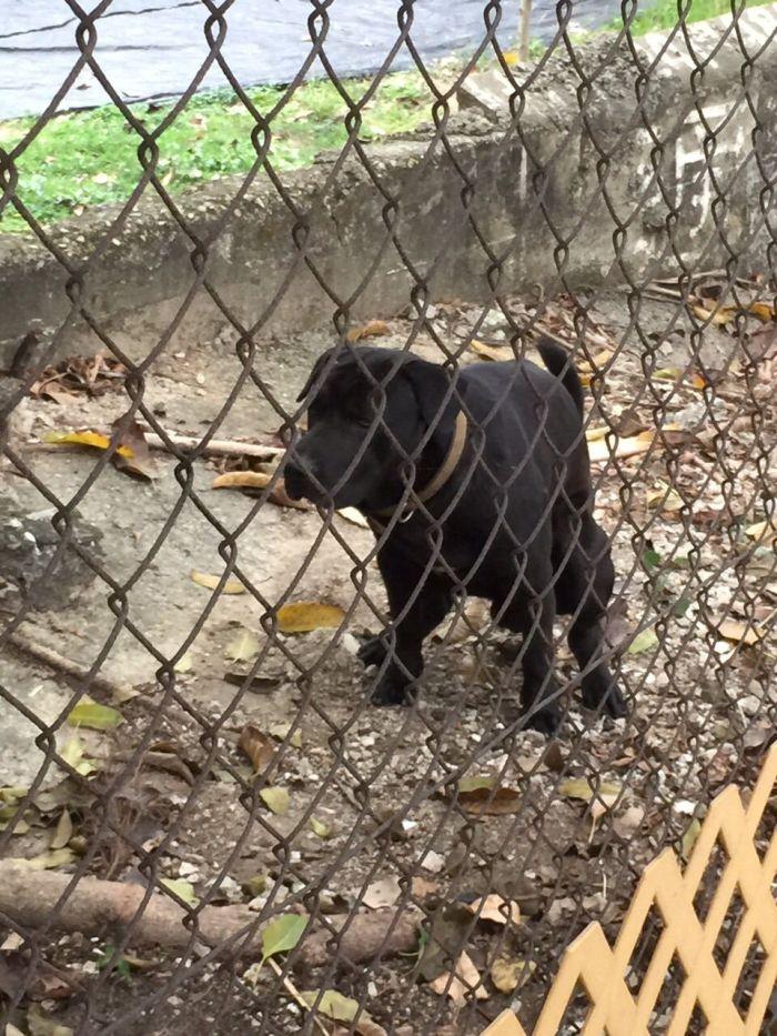 貓兒失蹤,但圍封的苗圃內竟然出現兩隻狗,令人懷疑事件是人為。