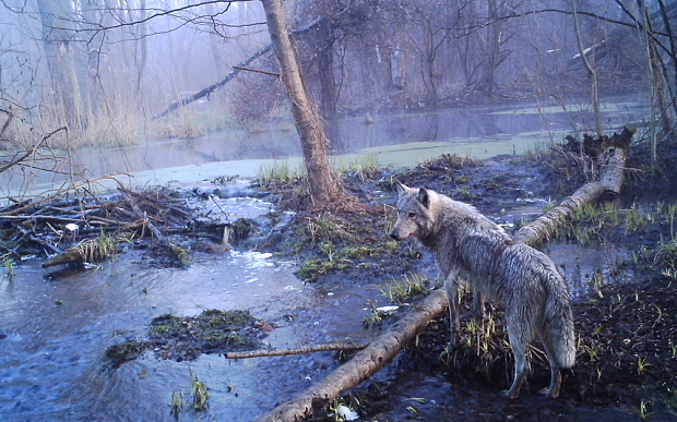 Photo: Sergey Gashchak/Chernobyl Centre