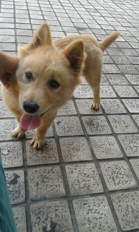 Wing在玉林街上遇到這流浪小狗,果斷救走牠免成狗販目標。