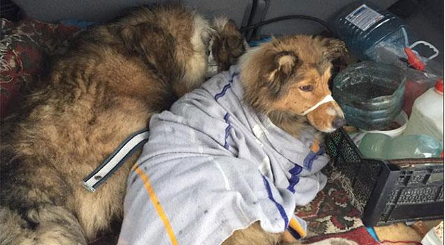 兩狗狗獲狗後返回主人身旁。 網上圖片
