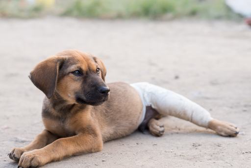 Jacky被車輾斷腳骨, 幸得到張邨文救助, 終於能夠正常行走。