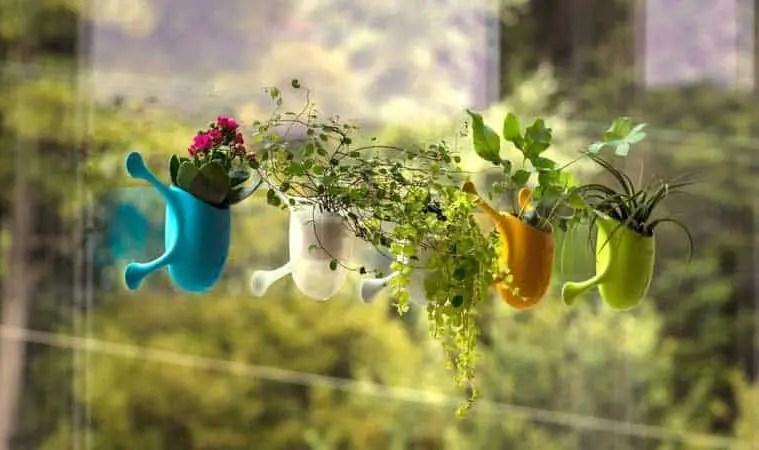 Livi portable plant holder that sticks to walls and windows