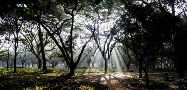 Cubbon Park, places to visit in Bangalore with friends