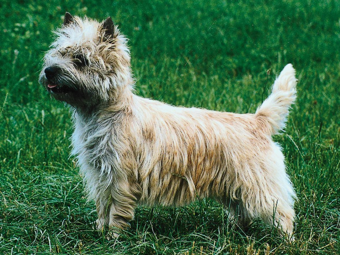 Serene 10 Races Chiens C3a2ge 5 Longest Living Dogs Wiki Longest Living Dog Ever Recorded bark post Longest Living Dogs