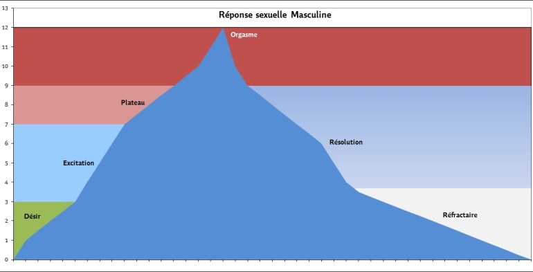 Réponse sexuelle masculine