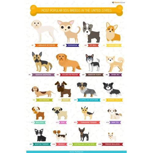 Medium Crop Of German Names For Dogs