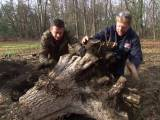 How to Dig Up Tree Stumps