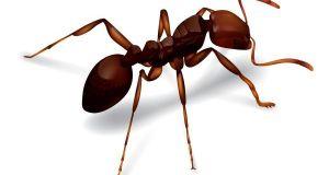ant-invasion-2