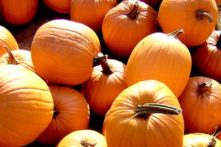 The History of a Pumpkin: Decor, Dessert...