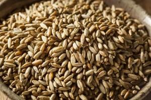 Raw Rye Grain for Whiskey