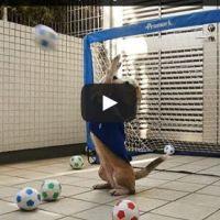 فيديو: كلب يصد 26 ركلة جزاء ببراعة