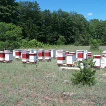Withers Mountain Honey Farm near Mancelona MI. Photo by Jim Withers.