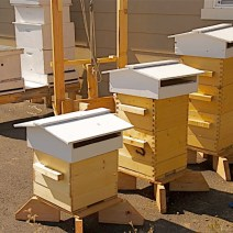 Warre and Langstroth hives by Thomas Friedland of Ellensberg WA.
