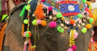Laos Elephant Festival