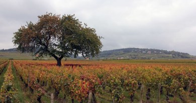 Bespoke Burgundy Wine Tour