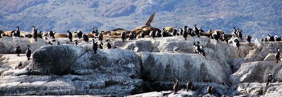Seals and penguins in Ushuaia