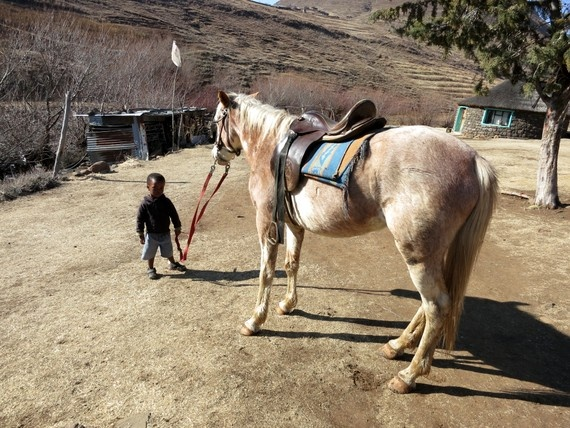 Young Lesotho boy tending to a horse