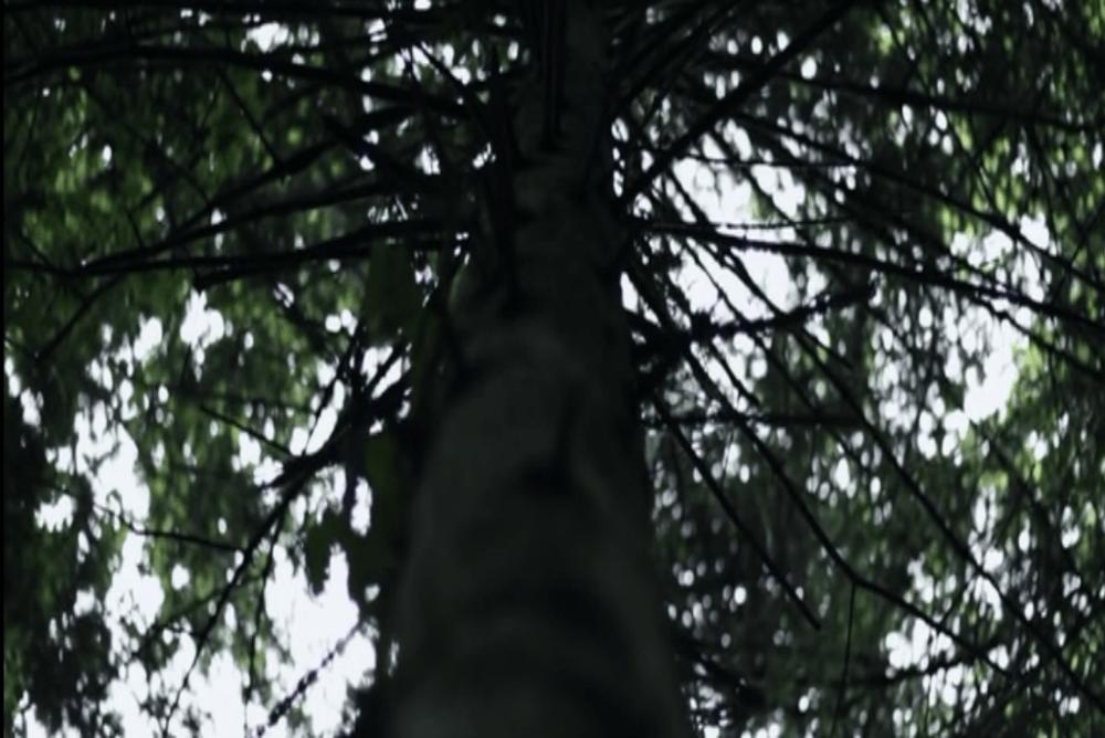 3. Devils Woods, tree