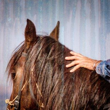 Equine Programmes