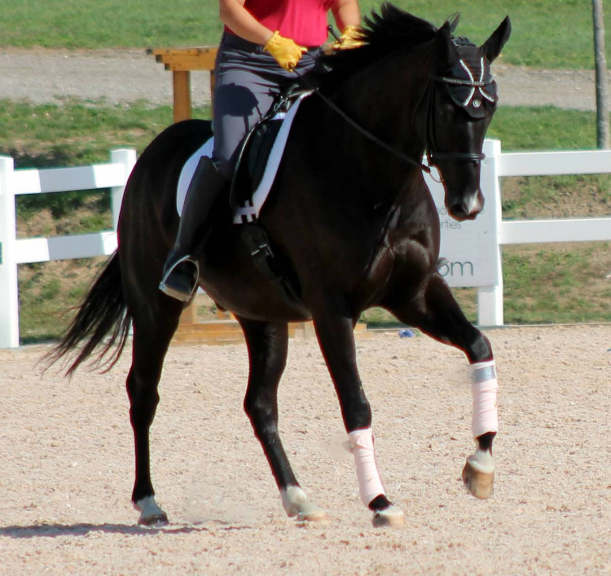 Wrong Canter Lead? 5 Ways To Fix It!