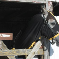 Empty fields, captive horses: Why stabling can be harmful to your horse
