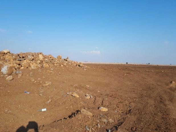 סיקול אבנים ברמת הגולן צילום: בצלאל ארליך