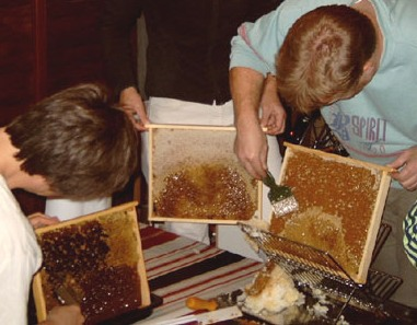 Beewax is capped off the honeycomb before the pure honey can be extracted