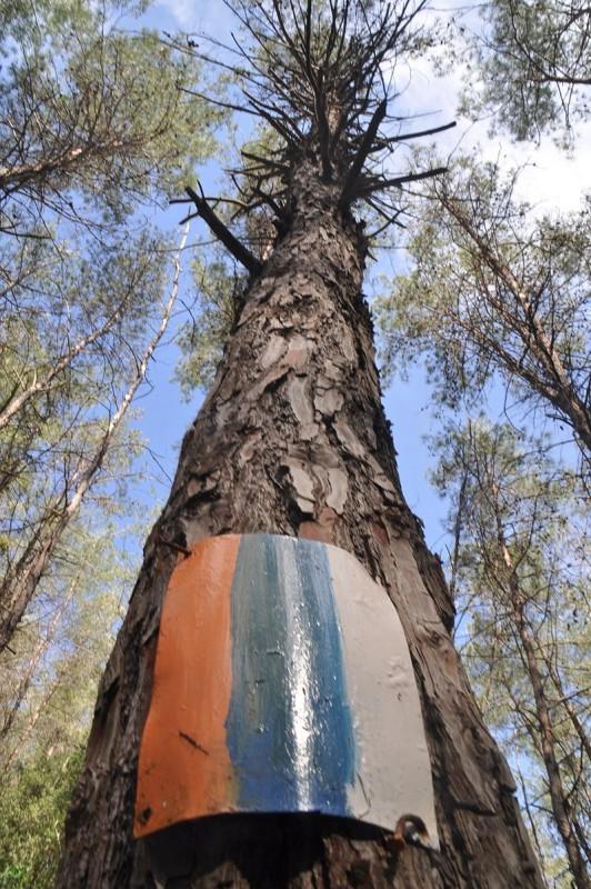 סימון השביל על עץ צילום:אורן פלס